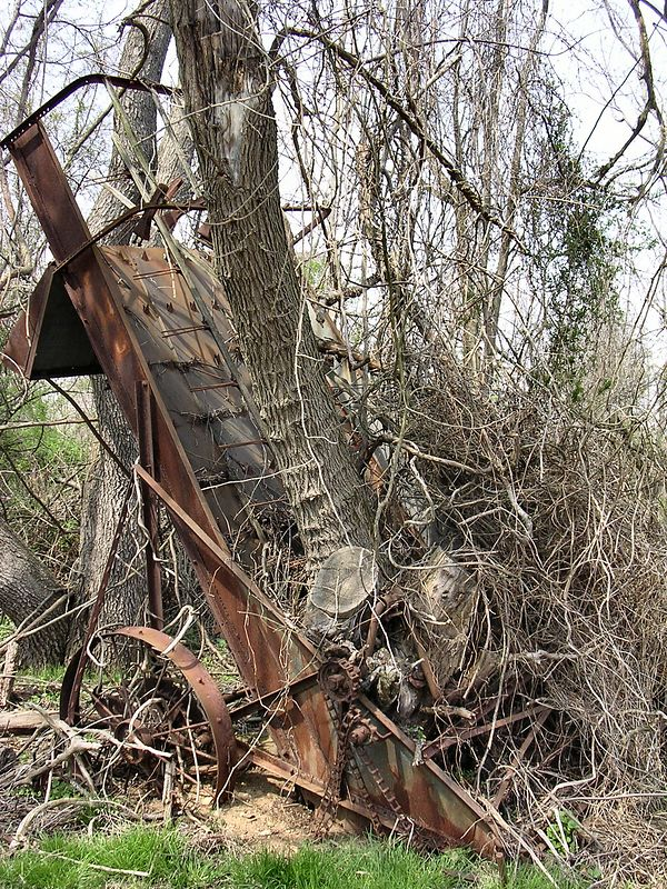 Another determined tree has grown up inside the rusted hulk of a hay-loader.