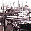 Nancy Rose,Southern California Fish,Unloading Blue Fin,