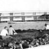 Men Sewing Net,San Diego Bay,1950's, 3 (2)