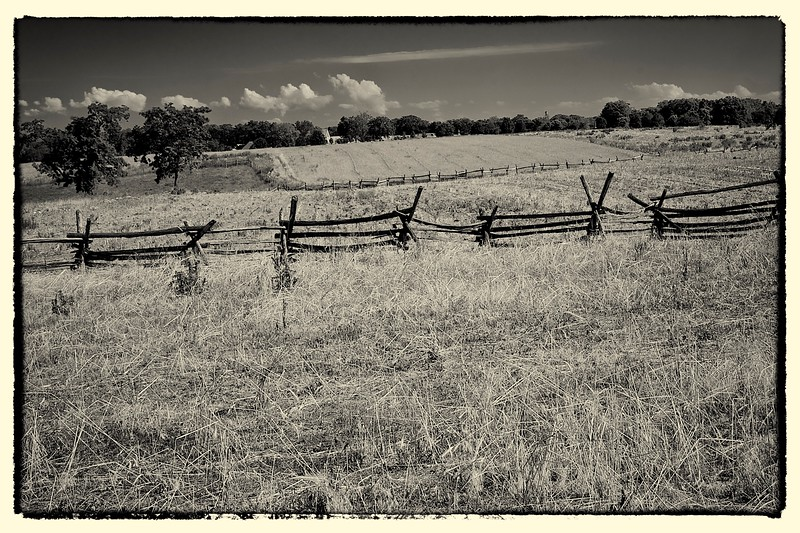 The Cornfield, Antietam, MD