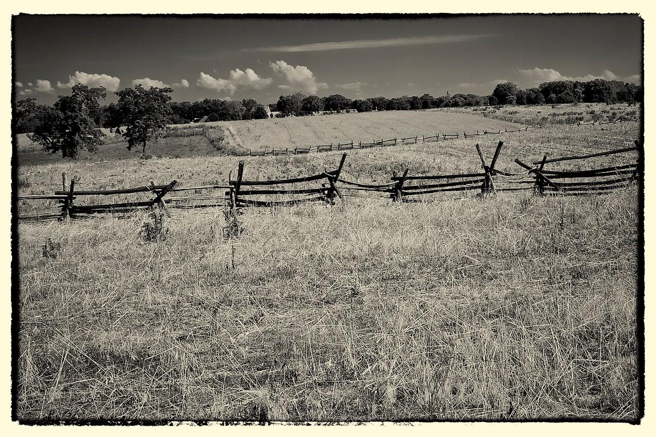 The Cornfield, Antietam, MD