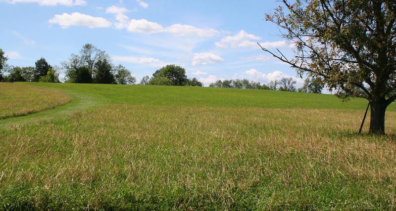 Bushong's Hill