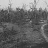 Shiloh - Sunken Road @ Hornet's Nest (ca. 1865)