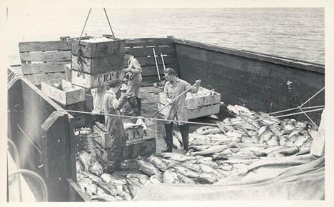 1945_Elmore_cannery_18ton