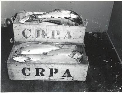1946_CRPA_Salmon_Boxed
