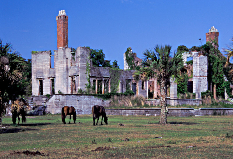 Dungeness Carnegie Mansion Ruin on Cumberland Island, Georgia - Former Greene Property - with Horses