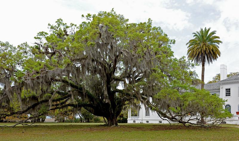 Plum Orchard Mansion on Cumberland Island, Georgia along the Brickhill River 04-05-09 The Oak Tree