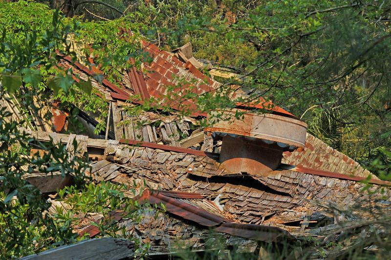Plum Orchard Area of Cumberland Island Georgia off the Intracoastal Waterway (ICW)  05-18-11