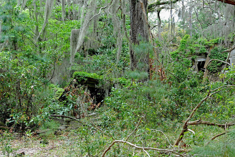 Plum Orchard area on Cumberland Island, Georgia along the Brickhill River 04-05-09 Fallen Down House Ruins within sight of Plum Orchard Mansion