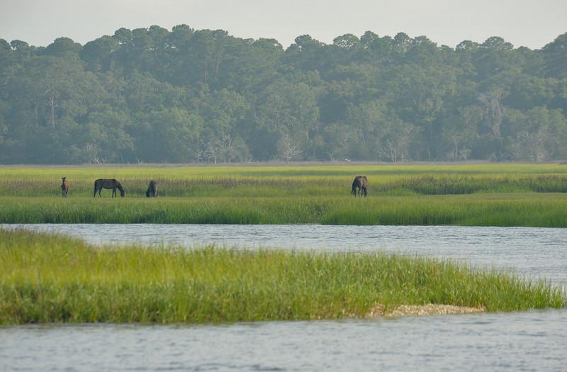 Wild Horses at Cumberland Island Georgia
