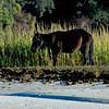 Cumberland-Horses-3797