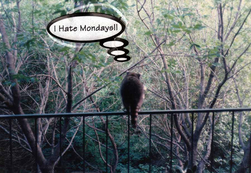 RACCOON VISITOR<br /> One of the varmints in the area, along with hordes of squirrels and wood rats. Squirrels in the trees during the day, rats in the trees at night. (My friend, Danny, and I used to shoot at the rats with my BB pistol, until we tried to put our own eyes out with a ricochet.) The sticker came with a package of album sheets, and I thought this one said it all for this guy.