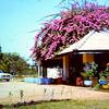 DWS GWS Kasunga Road 1960s