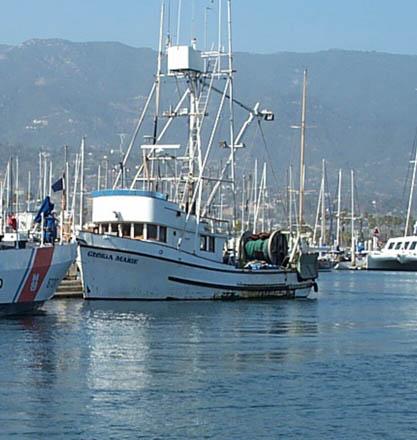 Gloria Marie  Lora Lee II  Built 1964 Marine View Tacoma  Harold Johnston  Stan Davis   Hepp   Pic Taken Santa Barbara