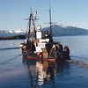 Tom & Al,Built 1900 Ballard as Ragnhild,New England Fish,Eben Parker,Frank Parker,John Farris,Pic Taken Kodiak Alaska