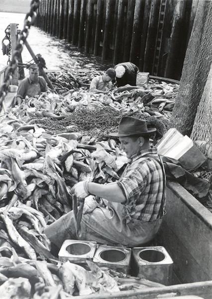 1948,Trask,Shark livers,30 ton sharks,4 ton of livers,7000$,Al Mather Skipper,Kenny Kiviaho on deck,