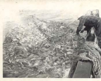 1940_s_Dogfish_Sunbeam