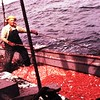 1960  Jalmar Johnson  Sunrise  Shrimp Fishing  Rudy Lovvald