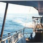 Whiting_1980_s_West_Coast