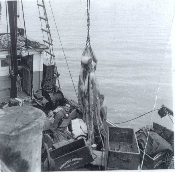 Santa_Barbara_Farallone_Fisheries_Octopus