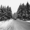 Photo courtesy of Fred Korb<br /> Snow-covered evergreens line a road in Belgium's Ardenne Forest region where the Battle of the Bulge took place.