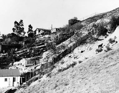 1950, Hillside Goats