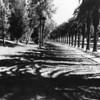 1950, Row of Palms