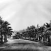 Palm Tree Lines