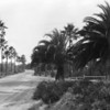 Palm Tree Streets