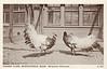 Graves A137 Mongolian Pheasants