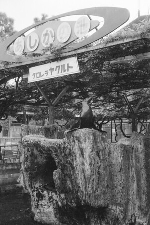 At an unidentified zoo in Japan, July/August 1963