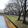 Cherry trees by Tamagawa aqueduct