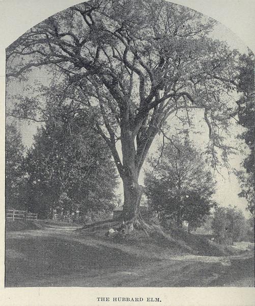 Hatfield Hubbard Elm
