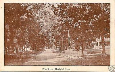Hatfield Elm Street