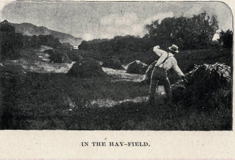 Hatfield Hay Field