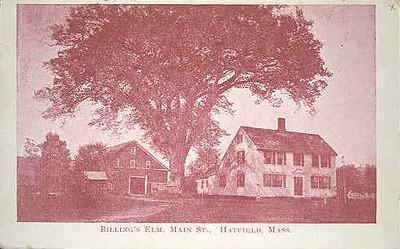 Hatfield Billing's Elm Main St