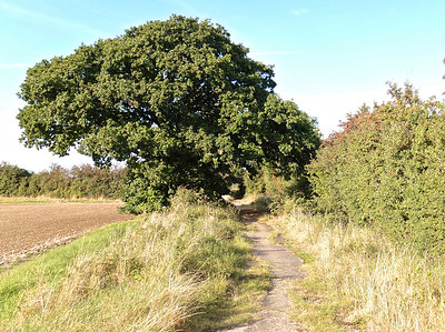 The path to and from Tempsford airfield and barn.
