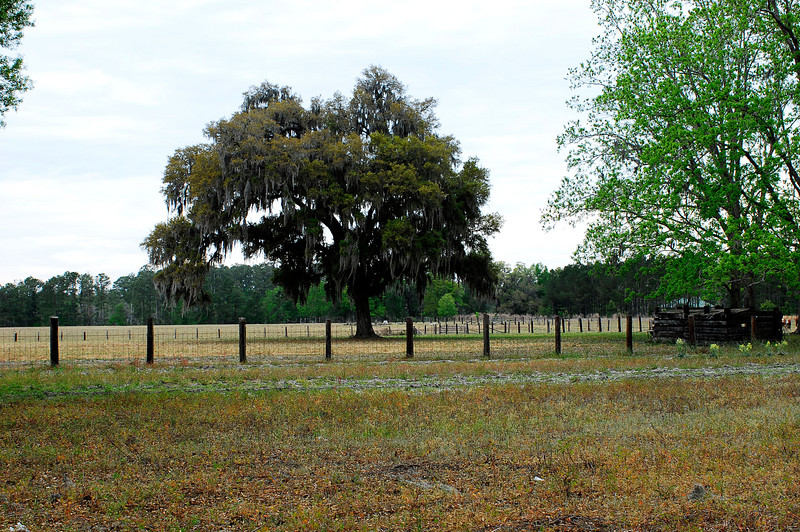 Historical Cemetery Plot in Eulonia in what was called Baillie Plantation. Relatives of Troup Nightingale and Billy McKinnon of Glynn and McIntosh Counties. Includes memorials for Governor Troup and Dr. Troup, Brailsford, Dent, and more. 9 graves though some are not seen. Documentation effort by Amy Hedrick