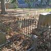 Oak Grove Cemetery in Brunswick, Georgia Before tree is removed 12-10-16
