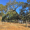 Oak Grove Cemetery in Brunswick, Georgia Tree is removed 12-10-16
