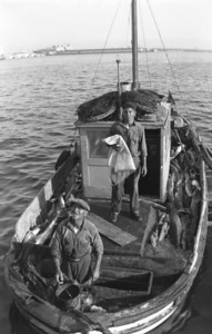 Italian fisherman unloading daily catch at the San Diego Embarcadero.  Courtesy of the Magueri Family.