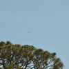 Blue Angels Over Hofwyl-Broadfield Plantation 03-25-17