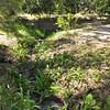Hofwyl Artesian Well Facility 04-09-17