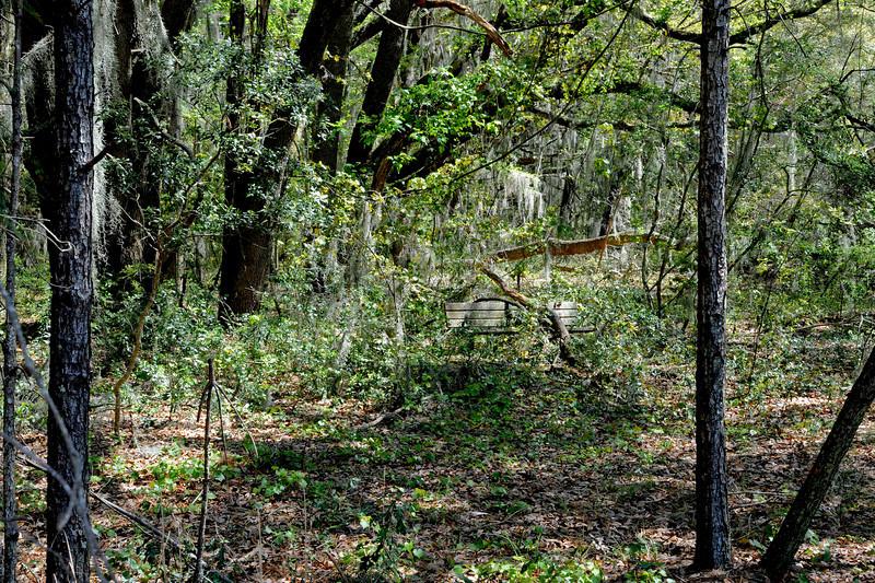 Hofwyl Plantation Bench in Woods near Tabby Ruins