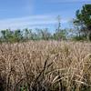 Hofwyl Plantation - Ricefield Dike Path into Ricefield near Tabby Ruins