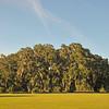Hofwyl-Broadfield Plantation 10-16-13