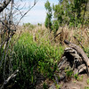 Hofwyl Plantation - Ricefield Dike Path into Ricefield near Tabby Ruins - Rope on Stump