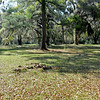 Hofwyl Plantation - Clump of bricks from original Plantation House in area where the house use to be