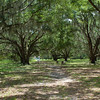 Hofwyl-Broadfield Plantation near Brunswick, Georgia - 06-19-12