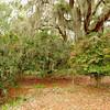 Camelias at Hofwyl-Broadfield Plantation 03-05-11 near Brunswick, Georgia Glynn County